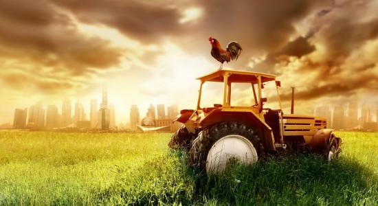 Tractor and Chicken Mural